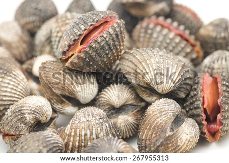 Close up of live and fresh clams or mussels on white background - stock photo