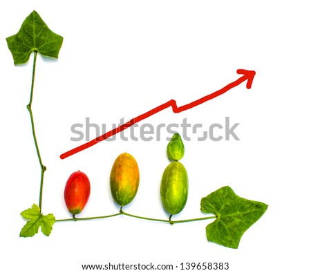 close up of lvy Gourd's fruits and leaves with finance business graph on white background - stock photo