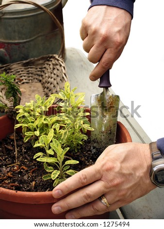 Close up of man potting a plant with gardening tools isolated on white - stock photo
