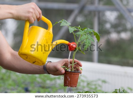 Close up of man's hand watering plants in greenhouse - stock photo