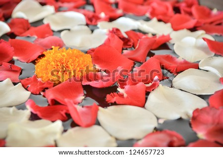 Close up of Marigold flower and petal of red and white rose on the surface of water - stock photo