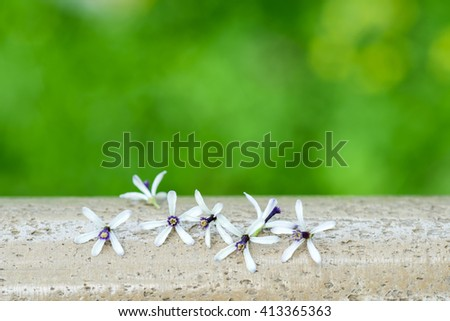 close up of  melia flower - stock photo