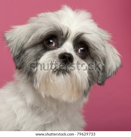 Close-up of Mixed-breed dog, 1 year old, in front of pink background - stock photo