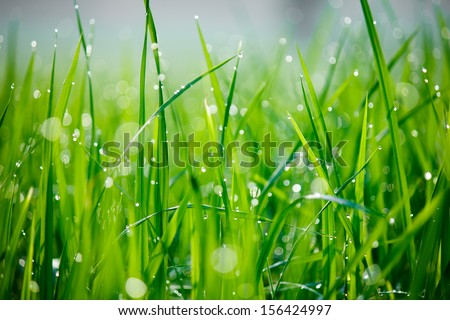 close-up of morning dew on green grass with round bokeh - stock photo