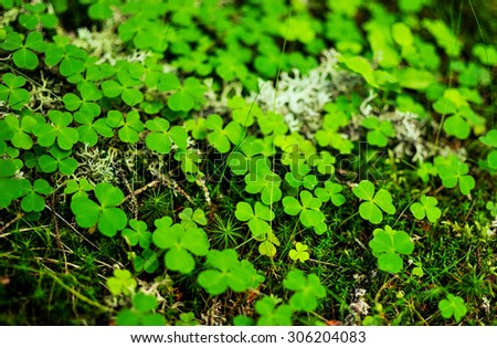 Close-up of moss, green clovers and grass - stock photo
