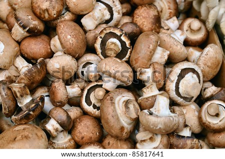 close up of mushrooms on market stand - stock photo