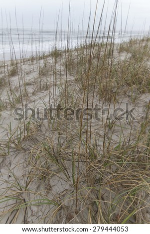 Close up of native beach grass growing on sand dunes, with the sea in the background, helps to prevent the shore from erosion by ocean tides  - stock photo