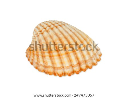Close up of ocean shell isolated on white background. - stock photo
