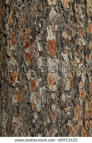 Close up of old pine bark surface texture - stock photo