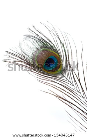 Close up of one peacock feather isolated on white background - stock photo