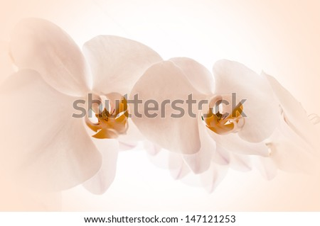 Close-up of orchids on light background. - stock photo