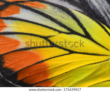 Close up of Painted Jezebel Butterfly's wings in great texture - stock photo