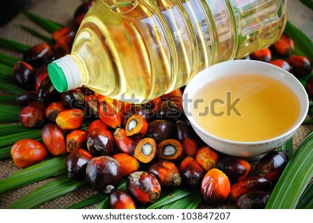 Close up of Palm Oil fruits and Cooking Oil. - stock photo