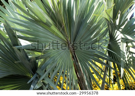 Close up of palm tree - stock photo