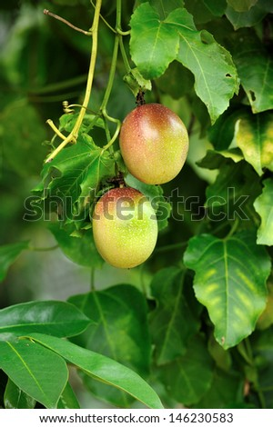 Close up of passion fruit, selective focus.  - stock photo