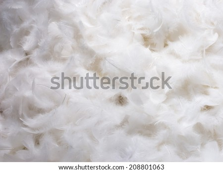 Close-Up of Pile of White Fluffy Feathers - stock photo