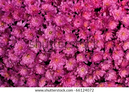 Close up of pink flower background - stock photo