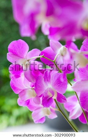 Close-up of pink orchid - stock photo