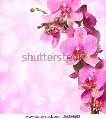 Close-up of pink orchid flower on white and pink  background - stock photo