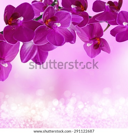 Close-up of pink orchid phalaenopsis. Bouquet of flowers orchids - stock photo