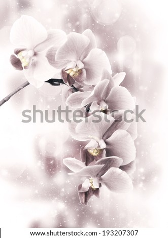 Close-up of pink orchids on light abstract background. Toned image - stock photo