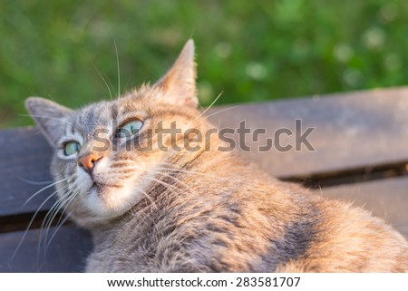 Close up of playful domestic cat lying on wooden bench. Shot at sunset with very shallow depth of field and focused on eyes. - stock photo