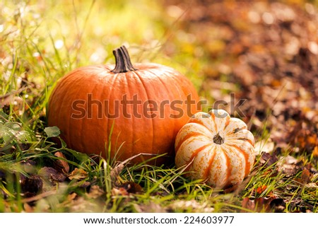 Close-up of pumpkins on foliage - stock photo
