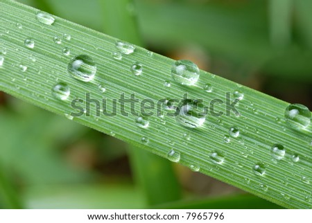 Close-up of raindrops (dewdrops) on a blade of grass - stock photo
