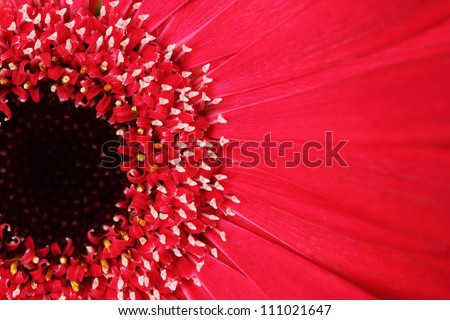 close up of red gerbera flower - stock photo