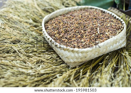 close-up of rice straw and rice grain in basket - stock photo