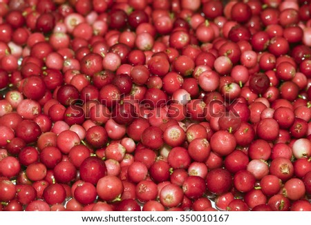 Close-up of ripe cowberry for texture or background - stock photo