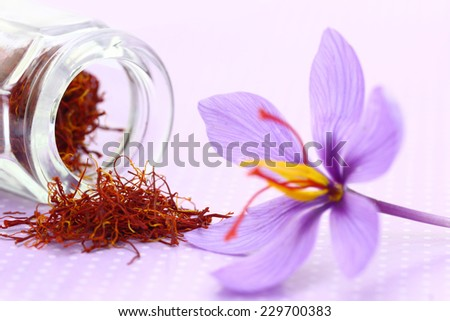 Close up of saffron flower and dried saffron spice  - stock photo