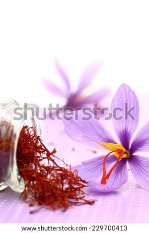 Close up of saffron flower and dried saffron spice  - stock photo