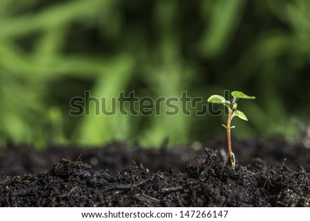 Close up of seedling sprouting from the ground with green bokeh background - stock photo