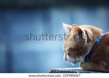 close up of sleeping cat - stock photo
