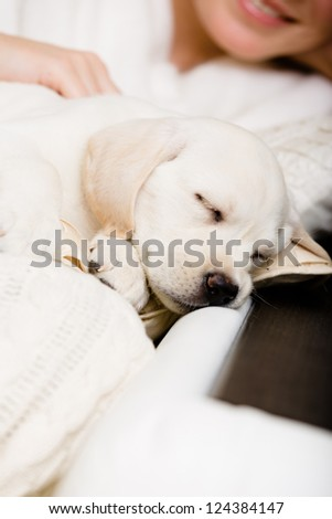 Close up of sleeping white puppy on the hands of female owner sitting on the sofa - stock photo