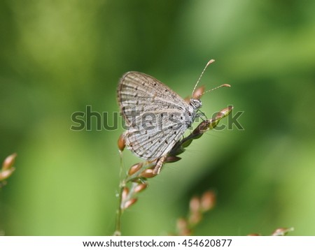 close up of small blue butterfly perched on tiny grass flower natural bokeh background - stock photo