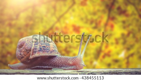 Close-up of snail against branches and leaves - stock photo