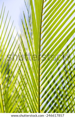 close up of some palm tree leaves with blue sky - stock photo