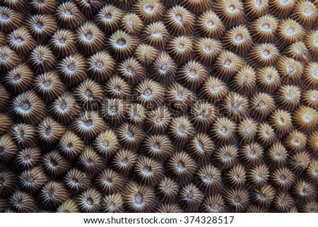 Close up of stony coral with coral polyps - stock photo