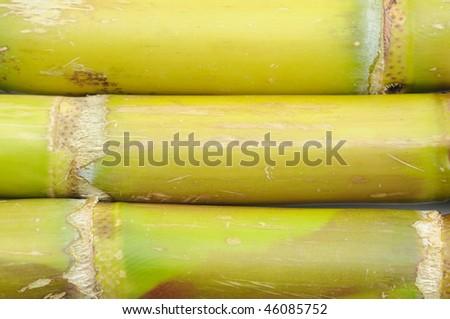 Close up of sugar cane background - stock photo