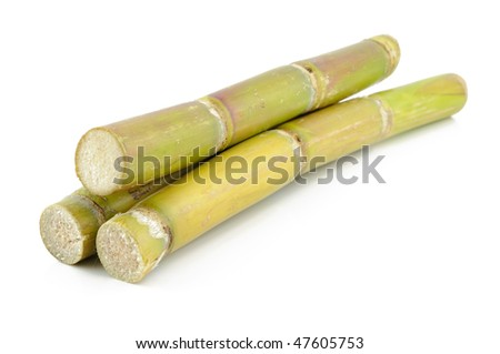 Close up of sugar cane in isolated white background - stock photo