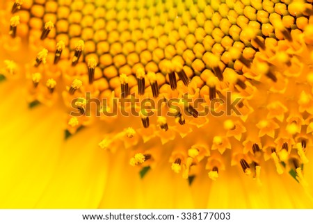 close up of sunflower.image is soft blurry.Image contain certain grain or noise. - stock photo