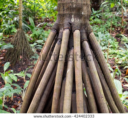 close up of surface tree roots - stock photo