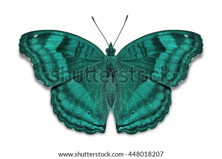 Close up of teal color Chocolate Pansy (Junonia iphita) butterfly, dorsal view, isolated on white background with clipping path - stock photo