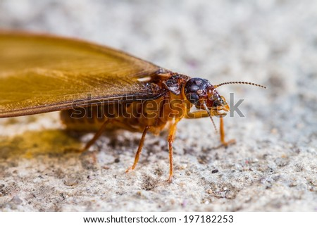 Close up of termite white ant on floor - stock photo