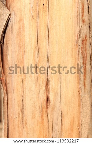 Close up of texture tree bark on old tree. - stock photo