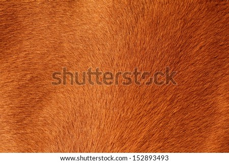 close up of textured pelt from a brown horse - stock photo