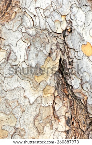 close-up of the bark of old tree trunk - stock photo