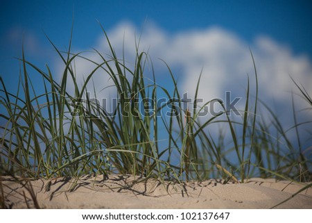 Close up of the beach grass in Surfers Paradise, Gold Coast, Queensland, Australia - stock photo